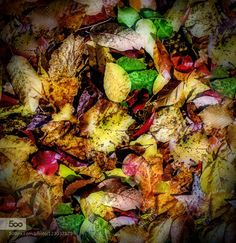 Autumn Leaves by Breezeway