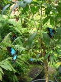 Australian Butterfly Sanctuary - Kuranda, Tropical North Queensland, Australia