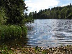 Der Silberteich zwischen Braunlage und Sankt Andreasberg inmitten des Nationalparks Harz. Am Ostufer führt ein Weg streckenweise am Wasser e...