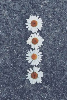 Bild über We Heart It https://weheartit.com/entry/124879888 #amazing #beautiful #daisies #flowers #happy #hipster #photography #tumblr #white #flowerscool #flowershappylovesmile