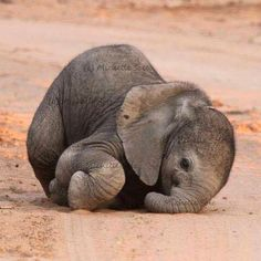 Baby Elephant ~ How cute is this?