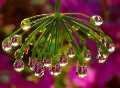 Dew drops weighing down a plant.