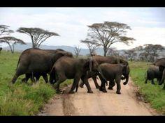 The Serengeti National Park in Tanzania