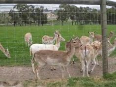 1- pet kangaroos-33  mins from melbourne  Chesterfield Farm (Scoresby) - Nature -
