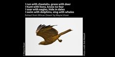 Poetry Wallpaper, Cheetahs, Dolphins, Eagles, Lions, Whale, Lion, Whales, Eagle