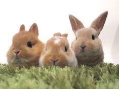 Ms Bunny - rabbit & hedgehog cafe - Tokyo