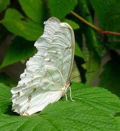 Résultats Google Recherche d'images correspondant à http://img.fotocommunity.com/images/Macro-insectes/papillons/Cette-nature-surprenante-a23217388.jpg