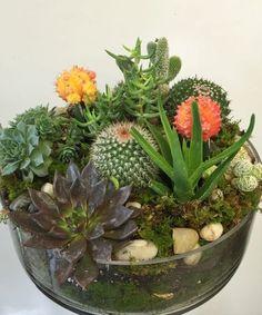 Succulent & Cacti Garden