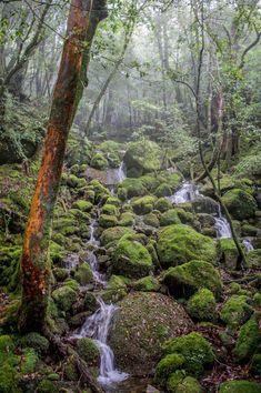 Moss Forest Yakushima Island Japan [1000 x 1504][OC]   landscape Nature Photos