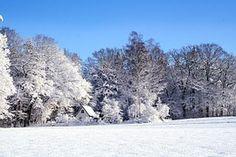 겨울, 경치, 눈, 감기, 겨울의, 순백의, 휴식, 화이트, 푸른