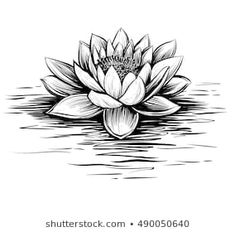 Find Vector Waterlily Water Waves Lotus Illustration stock images in HD and millions of other royalty-free stock photos, illustrations and vectors in the Shutterstock collection. Lotus Tattoo Design, Flower Tattoo Designs, Flower Tattoos, Water Lily Tattoos, Tattoo Bunt, Tattoos Mandala, Water Lilies, Tattoo Drawings, Sleeve Tattoos