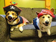 Pirates of the Corgi-bein'!