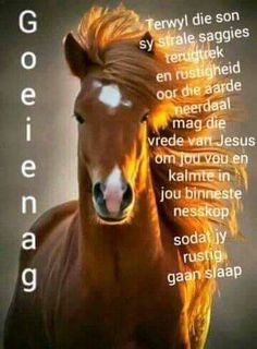Good Night Blessings, Good Night Wishes, Good Night Sweet Dreams, Good Night Quotes, Day Wishes, Evening Quotes, Afrikaanse Quotes, Goeie Nag, Angel Prayers