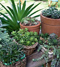 Em vasos de barro ou vime de tamanhos e formatos diferentes, as suculentas – de tipos variados – enfeitam um cantinho do jardim