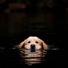 #dog #photography