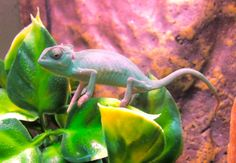 baby Pascal Babies, Animals, Animales, Babys, Animaux, Newborn Babies, Baby Baby, Infants, Boy Babies