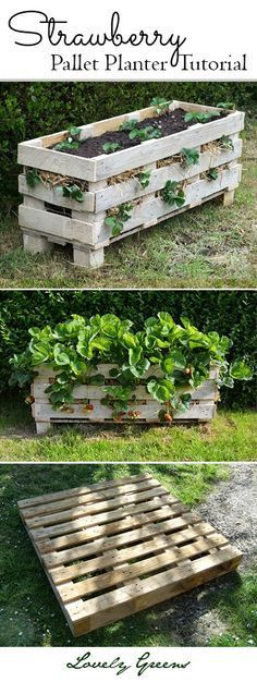 Grow strawberries in small spaces! Tutorial on how to build and plant a better Strawberry planter using a single wooden pallet.