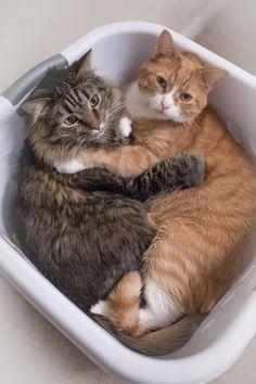 10 x katten die knuffelen - Hart voor Dieren