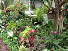Mimi's shade garden. July 2013