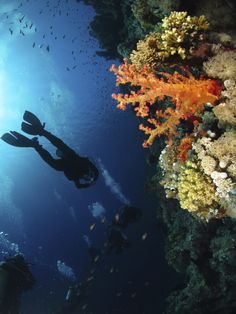Sheikh Coast Diving & Kiting Center #diving #coralreef #redsea