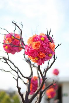 HOT PINK AND ORANGE KISSING BALLS IN BRANCHES
