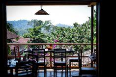 A Little Eco-Friendly Coffee Plantation on the Ruta del Café