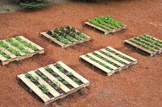 Wood Pallet Projects | Mavis Butterfield | Backyard Garden Plot Pictures – Week 20 of 52
