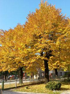 """Le foglie che vedete sono """"moneta di scambio"""" per i bambini che in questi giorni barattano sassi con foglie giallo oro."""
