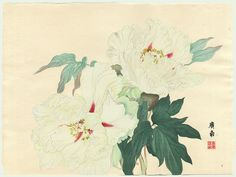 Peony by Tanigami Konan (Woodblock Print), ca 1917, Peony Series from the Teiten (Imperial Exhibition)