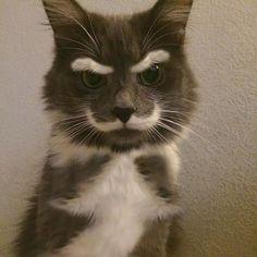 kat vacht ras raskat