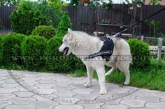 Purchase Nylon Dog Harness with reflective strap for pulling tracking training and sar! The harness is lightweight and has non-restrictive design. Dog Harness, Dog Leash, Dog Training Equipment, Dog Muzzle, Dog Supplies, Foxes, Kai, Beautiful Things, Police