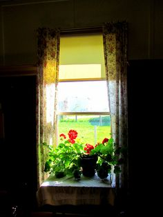 Happy Window Wednesday: Red Geranium Edition by carliewired, via Flickr