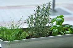 Herb garden in long thin container.