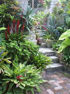 McCarthy garden; Open Gardens Australia; Artistic flair and a plantsman's touch are apparent in this tiny but lush elevated coastal garden. Small informal courtyard of subtropical species cascading over steps, walls and pots. Ferns contrast with colourful strappy foliage plants including gingers, aroids and bromeliads. Recycled sandstone terracing.