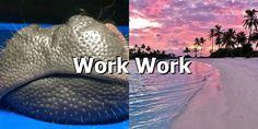 Work Work