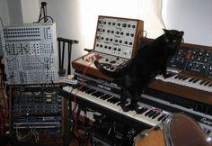 synth cat - Google 검색