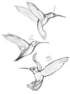 43 Super Ideas Humming Bird Sketch Hummingbird DrawingYou are in the right place about bird tattoo Here we offer you the most beautiful pictures about the bird clipart you are looking for. When you examine the 43 Super Ideas Humming Bird Sketch Hum Animal Sketches, Drawing Sketches, Drawing Ideas, Sketches Of Birds, Pencil Sketches Of Flowers, Drawings Of Flowers, Sketching, Sketch Ideas, Bird Drawings