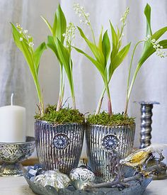 Lily of the Valley...love the pots and accessories...