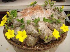 un radicione fiorito