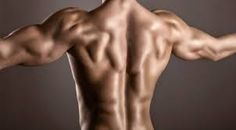Image result for back muscles