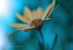 () by Juliana_Nan #nature #photooftheday #amazing #picoftheday