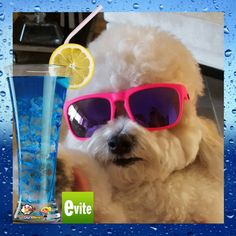 Throw a Pet Pawty With Evite Invitations & Win The #PawtyPeople Contest #ad #evite #bethere