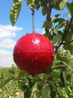 Products That Keep Worms or Bugs Away From Fruit Trees | Garden Guides