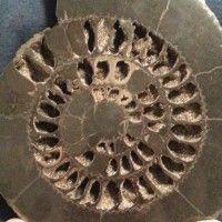 Rock Tumbler Diy, Cleaning Sea Shells, Rock Art, Home Crafts, Household, Rocks, Clay, Kansas City, Crystals