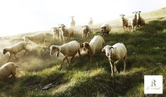 R de Rural no només són cases rurals, també és l'Andorra més rural. R de Rural no solo son casas rurales, también es la Andorra más rural. R de Rural n'est pas que des maisons d'hotes, c'est aussi l'Andorre la plus rurale. R de Rural is not just country cottages, it is also the most rural Andorra. #rderural #Andorra www.rderural.com Foto © Stevie Lázaro