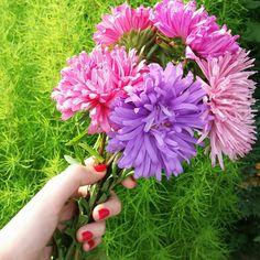 Birthday flower 🌸🌼