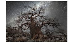 Photographer Beth Moon uncovers a link between the cosmos and tree growth in her breathtaking photo series, 'Diamond Nights. Starry Night Sky, Night Skies, Bonsai, Photo Ciel, African Tree, Baobab Tree, Colossal Art, Old Trees, World Images