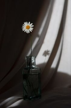 ✯ The Daisy Stands Alone✯ - Simple, strong, beautiful. Shadow Photography, Tumblr Photography, Still Life Photography, Book Photography, Creative Photography, Aesthetic Pastel Wallpaper, Aesthetic Backgrounds, Aesthetic Wallpapers, Daisy Wallpaper