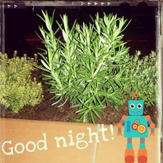 Good night! Buenas noches!   #urbangarden #veggies #igersmadrid #urbangardenersrepublic #growyourown #gardening #greenthumb #seeds #raisedbed #sprout #huertourbano #huerto #horticulture #semilleros #brote #semilla #homegrown #gogreen #Madrid #soil #maceta #horturba #balconygarden #balcony #growwhatyoueat