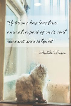 """Until one has loved an animal, a part of one's soul remains unawakened."" — Anatole France"